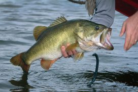 buy a kayak fish finder